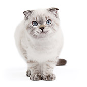 CAT 03 JE0357 01