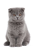 CAT 03 JE0364 01
