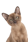 CAT 03 JE0371 01