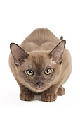CAT 03 JE0372 01
