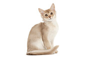 CAT 03 JE0373 01