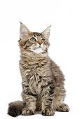 CAT 03 JE0374 01