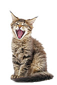 CAT 03 JE0377 01