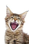 CAT 03 JE0378 01
