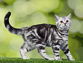 CAT 03 JE0379 01