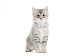 CAT 03 JE0380 01