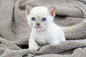 CAT 03 JE0385 01
