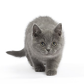 CAT 03 JE0386 01