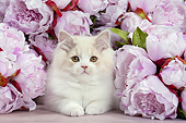 CAT 03 JE0387 01