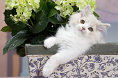 CAT 03 JE0389 01