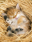 CAT 03 JE0392 01