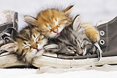 CAT 03 JE0395 01