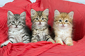 CAT 03 JE0397 01