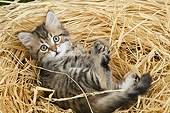 CAT 03 JE0402 01