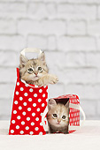 CAT 03 JE0405 01