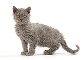 CAT 03 JE0407 01