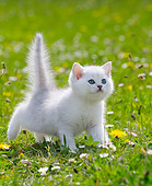 CAT 03 JE0411 01