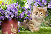 CAT 03 JE0413 01