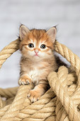 CAT 03 JE0415 01