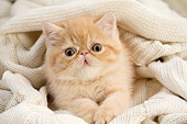 CAT 03 JE0422 01