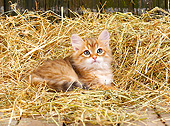 CAT 03 JE0423 01