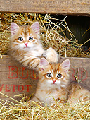 CAT 03 JE0424 01