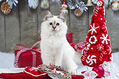 CAT 03 JE0431 01