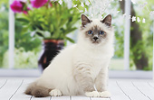 CAT 03 JE0433 01