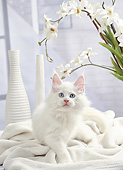 CAT 03 JE0434 01
