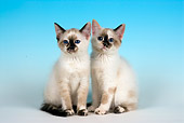 CAT 03 JF0032 01