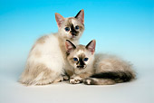 CAT 03 JF0045 01