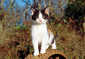 CAT 03 JN0001 01