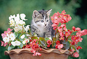 CAT 03 JS0001 01