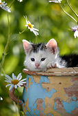 CAT 03 KH0003 01