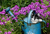 CAT 03 KH0008 01