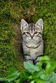 CAT 03 KH0022 01
