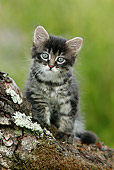 CAT 03 KH0026 01