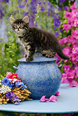 CAT 03 KH0027 01