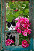 CAT 03 KH0032 01