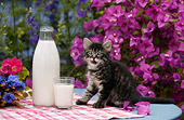 CAT 03 KH0035 01