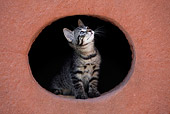 CAT 03 KH0040 01