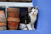 CAT 03 KH0044 01
