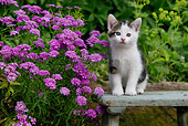 CAT 03 KH0045 01