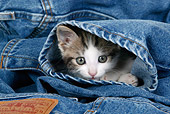 CAT 03 KH0049 01