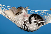 CAT 03 KH0050 01
