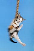 CAT 03 KH0051 01