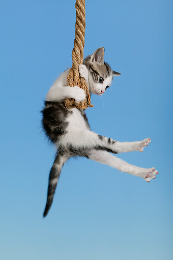 picture of swinging a cat
