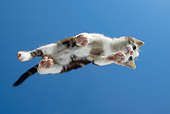 CAT 03 KH0054 01