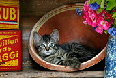 CAT 03 KH0057 01