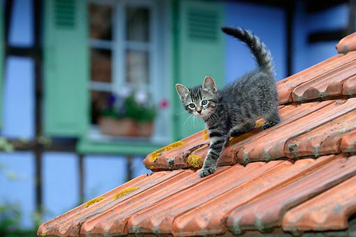 http://www.kimballstock.com/pix/CAT/03/CAT-03-KH0058-01P.JPG